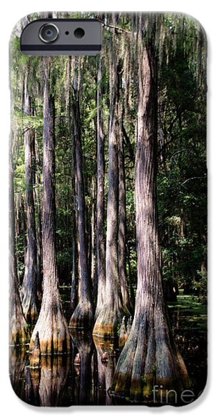 Mangrove Forest iPhone Cases - Florida Beauty 3 iPhone Case by Andrea Anderegg