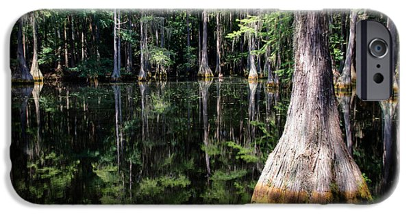 Mangrove Forest iPhone Cases - Florida Beauty 4 iPhone Case by Andrea Anderegg