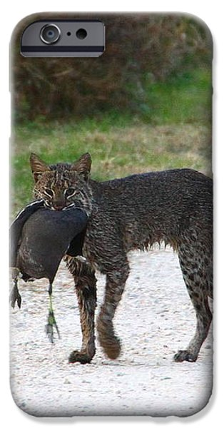 Florida Bobcat catches an evening snack iPhone Case by Barbara Bowen