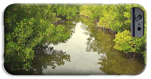 Mangrove Forest iPhone Cases - Florida Mangrove River Trees iPhone Case by Andrea Hazel Ihlefeld