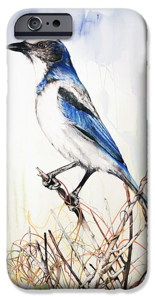 American ist Mixed Media iPhone Cases - Florida Scrub Jay iPhone Case by Anthony Burks Sr
