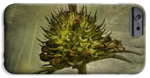 Nature Abstracts iPhone Cases - Flower Beauty after Blossom iPhone Case by Heiko Koehrer-Wagner