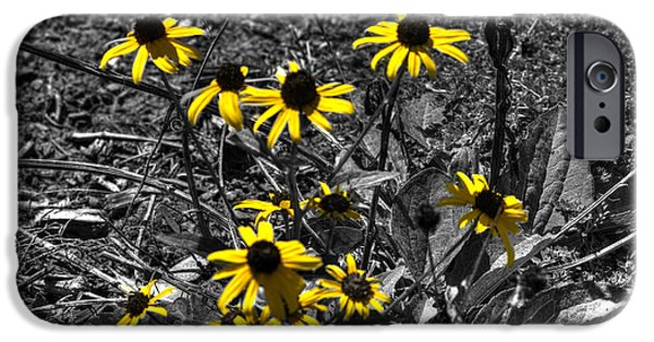 Meadow Photographs iPhone Cases - Flower Black Eyed Susan iPhone Case by John Straton