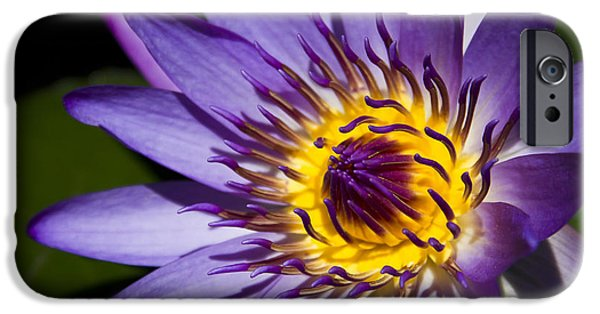 Poetic iPhone Cases - Flower Flames iPhone Case by Sharon Mau