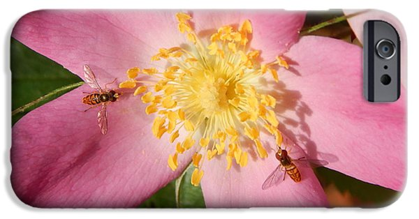 Arkansas iPhone Cases - Flower Flies on a Pink Wild Rose iPhone Case by Jefferson Danley