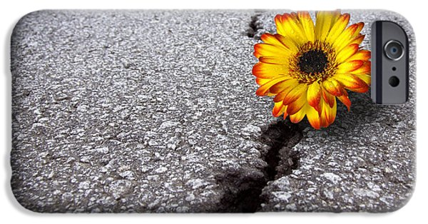 Grow iPhone Cases - Flower in asphalt iPhone Case by Carlos Caetano