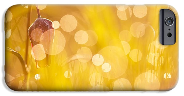 Meleagris iPhone Cases - Flower Party II iPhone Case by Roeselien Raimond