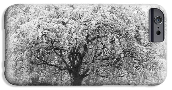 Floral Photographs iPhone Cases - Black and white Flowering Tree in Spring iPhone Case by ArtyZen Studios - ArtyZen Home
