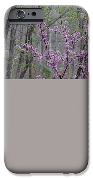Arkansas iPhone Cases - Flowering Trees iPhone Case by Michael Munster