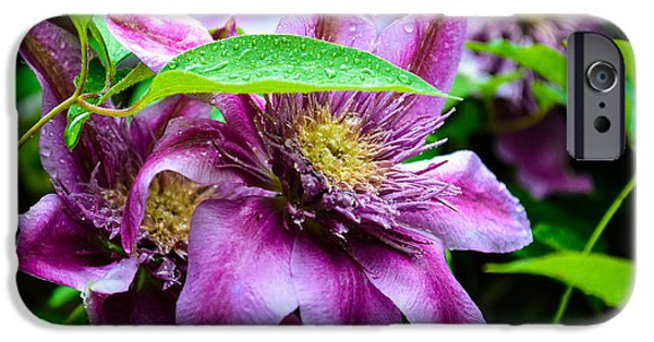 Raining iPhone Cases - Flowers After the Rain iPhone Case by Ruth Harpster