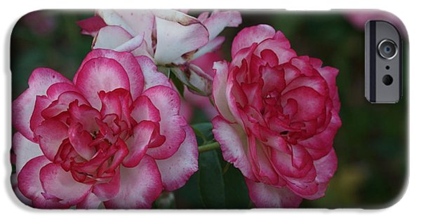 Nebraska iPhone Cases - Flowery Love 2 iPhone Case by Dimitry Papkov