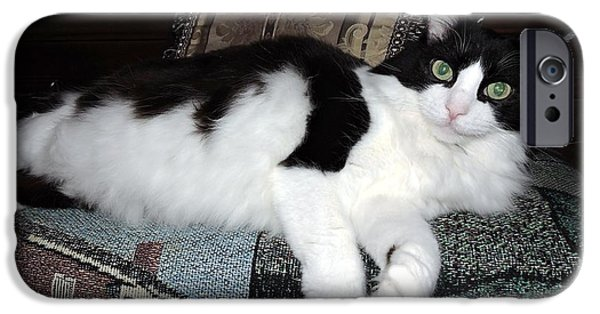 Baroness iPhone Cases - Fluffy Cat iPhone Case by Beth Williams