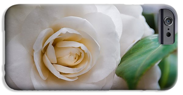 Nature Abstracts iPhone Cases - Fluffy Petals iPhone Case by Tim Stanley
