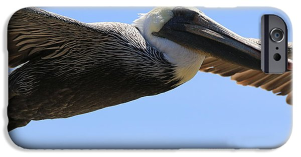 Sea Birds iPhone Cases - Fly By Adult  Brown Pelican iPhone Case by Craig Corwin
