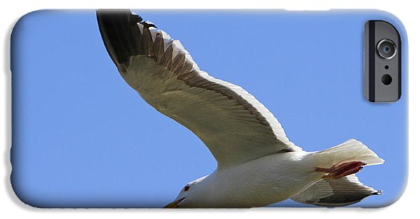 Sea Birds Pyrography iPhone Cases - Fly Like a Sea Gull iPhone Case by Shoal Hollingsworth