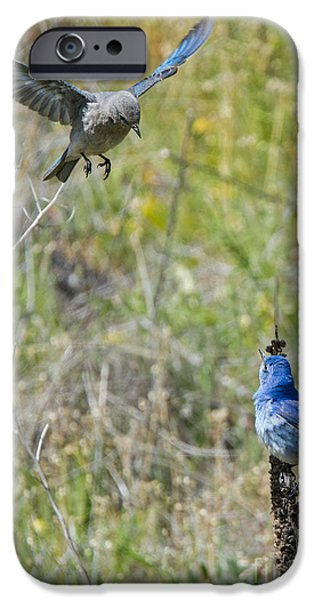 Bluebird iPhone Cases - Flyby Flirt iPhone Case by Mike Dawson