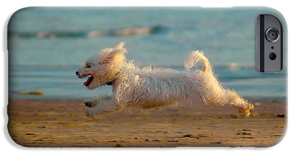 Dog Running. iPhone Cases - Flying Dog iPhone Case by Harry Spitz