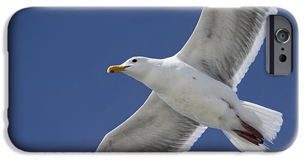 Flying Seagull iPhone Cases - Flying Seagull Against a Summer Sky iPhone Case by Peggy Collins