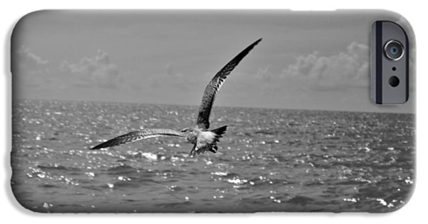 Flying Seagull iPhone Cases - Flying Seagull Black And White iPhone Case by Jack Stroube