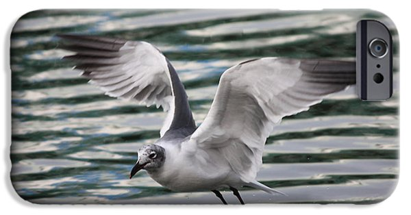 Flying Seagull iPhone Cases - Flying Seagull iPhone Case by Carol Groenen