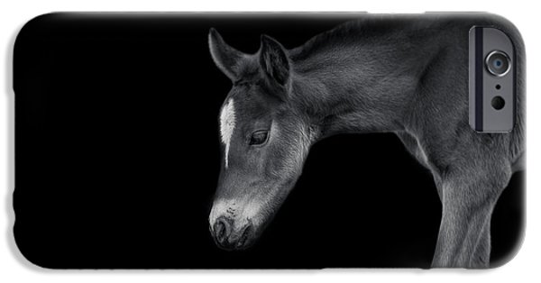 Horse iPhone Cases - Foal iPhone Case by Moses Ferreira