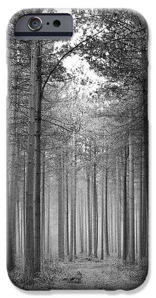 Foggy Forest iPhone Case by Svetlana Sewell