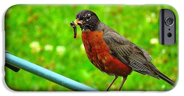 Baby Bird iPhone Cases - Food for baby Robins iPhone Case by J L Kempster