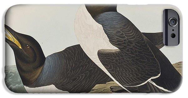 Sea Birds Drawings iPhone Cases - Foolish Guillemot iPhone Case by John James Audubon