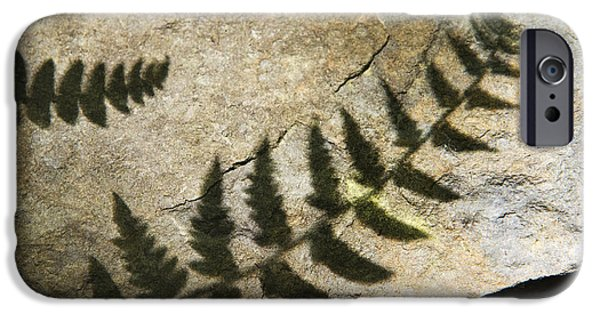 Slate Pattern iPhone Cases - Forest Fern Shadows iPhone Case by Christina Rollo