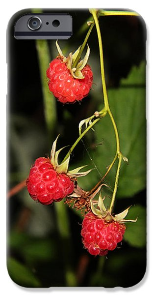 Berry iPhone Cases - Forest raspberry iPhone Case by Sergey Lukashin