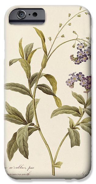 Flowers Drawings iPhone Cases - Forget Me Not iPhone Case by Pierre Joseph Redoute