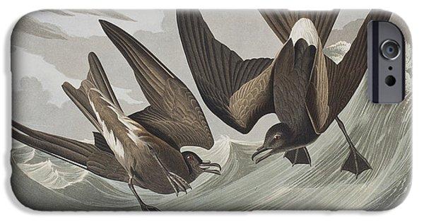 Beach iPhone Cases - Fork-tail Petrel iPhone Case by John James Audubon