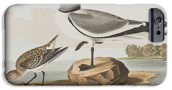 Seagull Drawings iPhone Cases - Fork-tailed Gull iPhone Case by John James Audubon