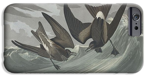 Seagull Drawings iPhone Cases - Fork-Tailed Petrel iPhone Case by John James Audubon