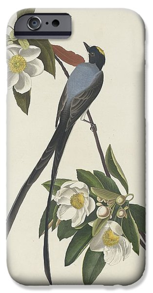 Animal Drawings iPhone Cases - Forked-Tail Flycatcher iPhone Case by John James Audubon