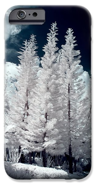 Nature Study iPhone Cases - Four Tropical Pines Infrared iPhone Case by Adam Romanowicz