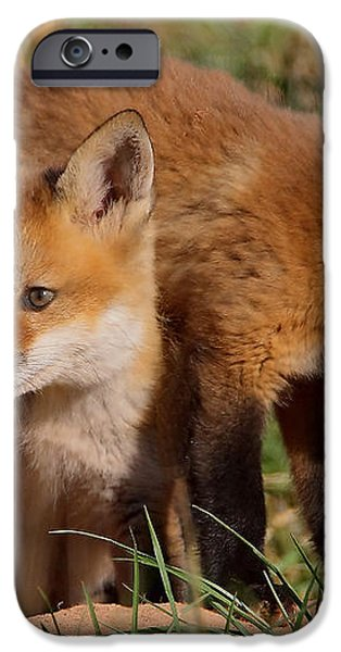 Fox Cubs Playing iPhone Case by William Jobes