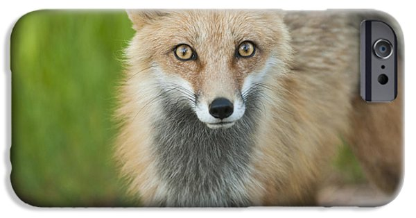 Red Eye iPhone Cases - Fox Eyes iPhone Case by Noah Bryant