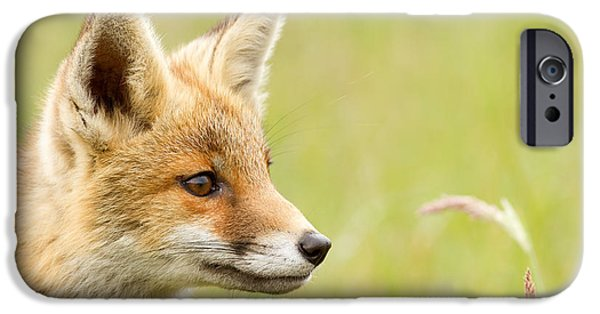 Innocence iPhone Cases - Fox Kit Dreams iPhone Case by Roeselien Raimond