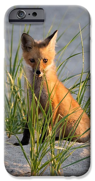 Fox iPhone Cases - Fox Kit Portrait iPhone Case by Bill Wakeley