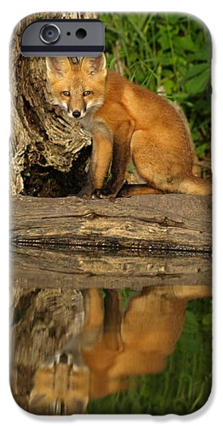 Recently Sold -  - Cute Puppy iPhone Cases - Fox Reflection iPhone Case by James Peterson
