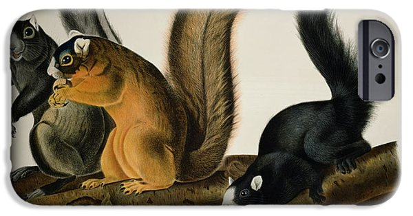 Animal Drawings iPhone Cases - Fox Squirrel iPhone Case by John James Audubon