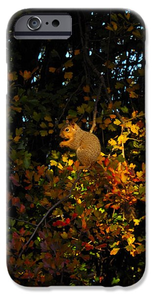 Fox Squirrel iPhone Cases - Fox Squirrel iPhone Case by Noah Cole