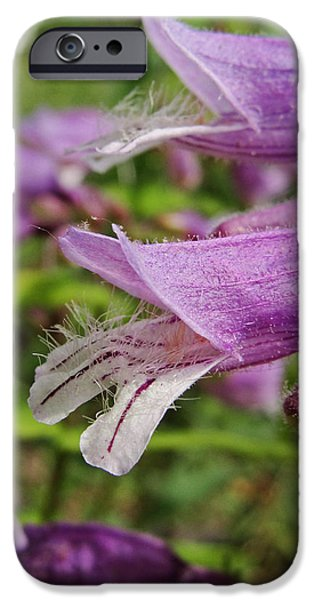 Flora iPhone Cases - Foxglove Beardtongue Flower iPhone Case by Janine Mannick