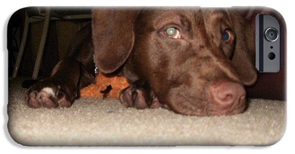 Chocolate Lab Digital Art iPhone Cases - Frayed Ends Of Sanity iPhone Case by Shauna Stevens