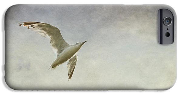 Flying Seagull iPhone Cases - Freedom iPhone Case by Maggie Terlecki