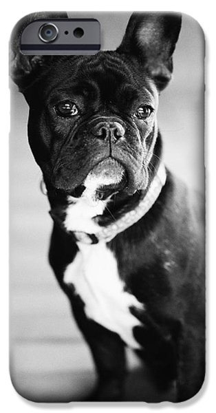 French Bulldog iPhone Cases - French Bulldog iPhone Case by Falko Follert