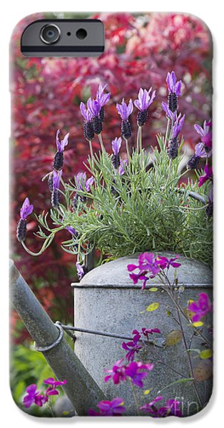 Plant iPhone Cases - French Lavender iPhone Case by Tim Gainey