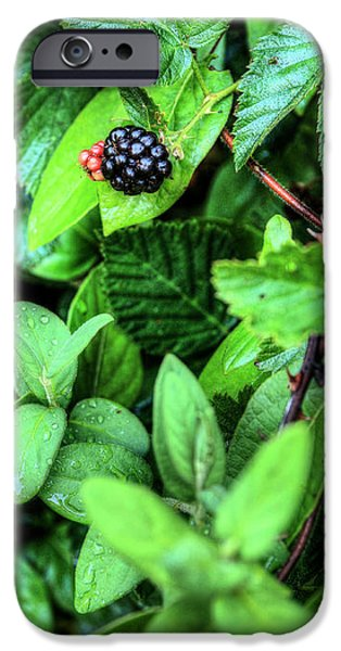 Black Berries iPhone Cases - Fresh  iPhone Case by JC Findley