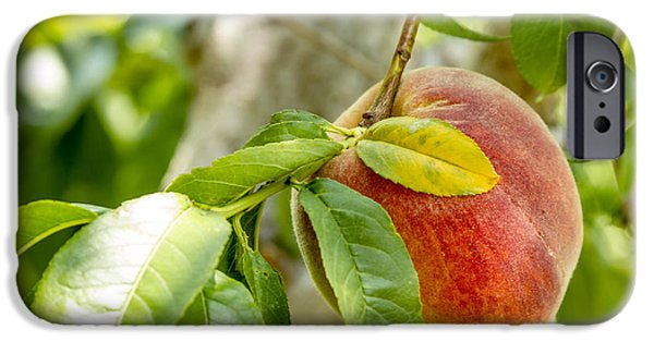 Locally Grown iPhone Cases - Fresh Peach Hanging in Orchard iPhone Case by Teri Virbickis